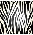 Zebra icon Animal print background vector image