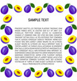plum frame with text vector image