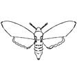 moth vector image vector image
