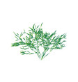 green shrub isolated vector image