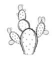 sketch of a cactus vector image