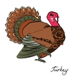 Color turkeyThanksgiving day vector image