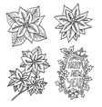 hand drawn poinsettia flowers set vector image vector image