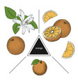 set of fruits whole orange slices and orange vector image