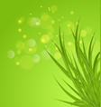 Spring background background with green grass vector image