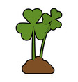 clovers plant isolated icon vector image