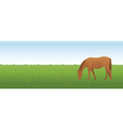horse on the meadow vector image