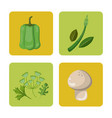 set vegetables fresh harvest healthy image vector image
