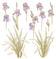 collection of iris flowers vector image vector image