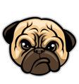 pug dog head vector image