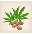 Heap of hemp seeds with leaves vector image