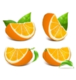 Fresh ripe oranges vector image vector image