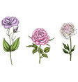 set with peony rose and eustoma flowers vector image