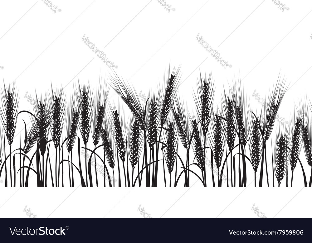 Ears of wheat black horizontal seamless pattern vector