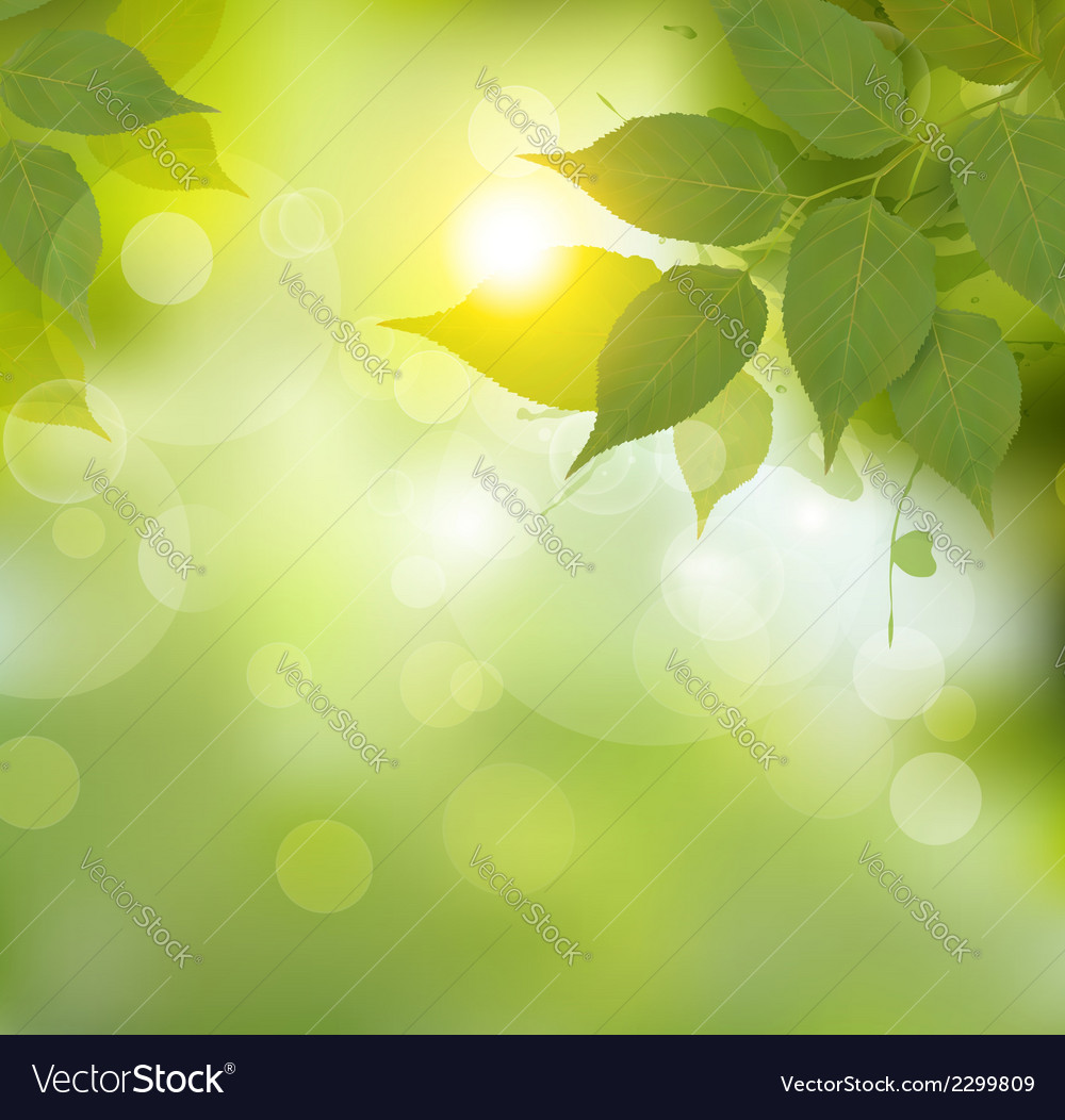 Nature background with green spring leaves vector
