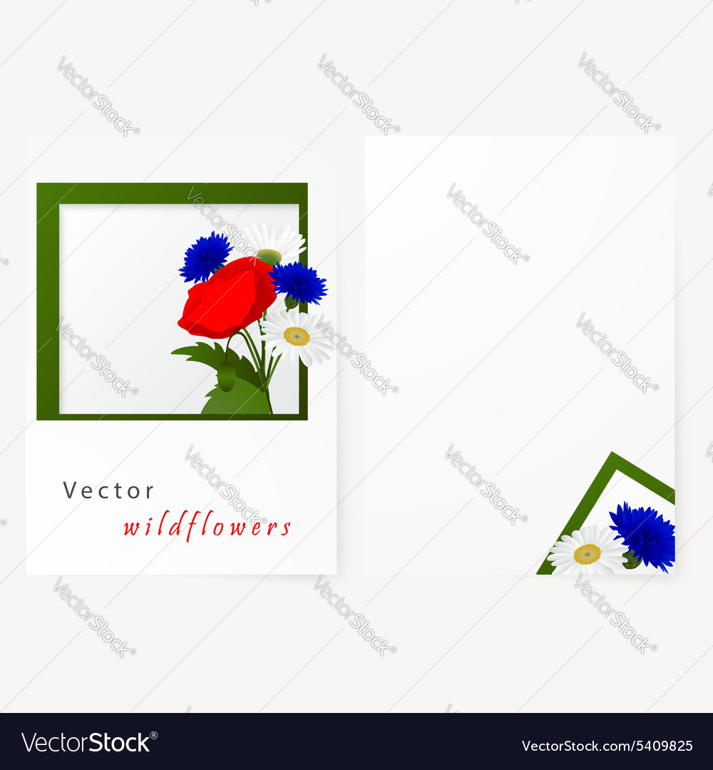 Template card with flowers chamomile cornflowers vector