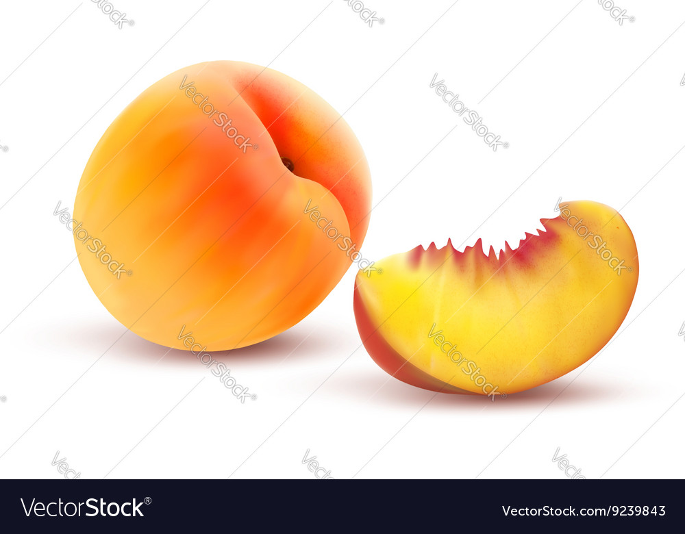 Peach and slice vector