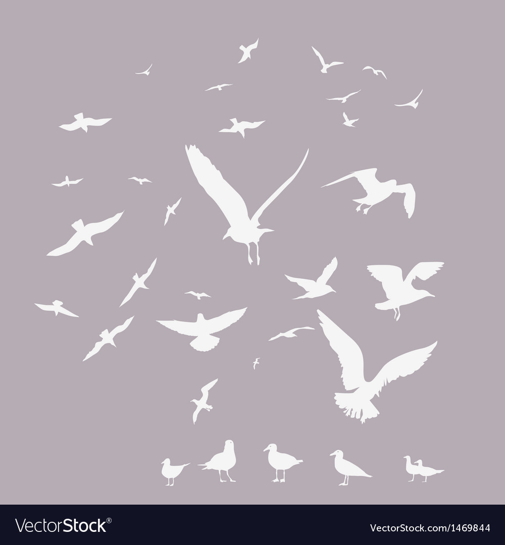 White pack of seagulls vector
