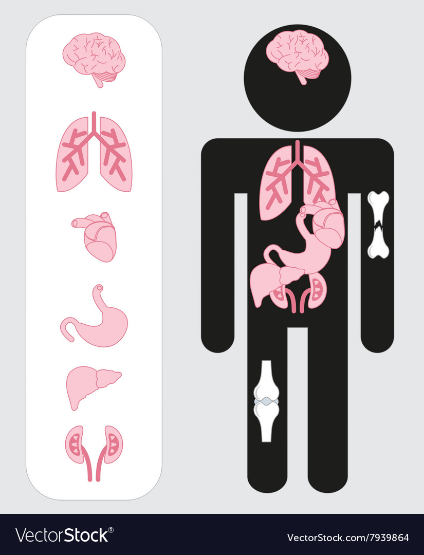 Medical human organs icon set with body vector