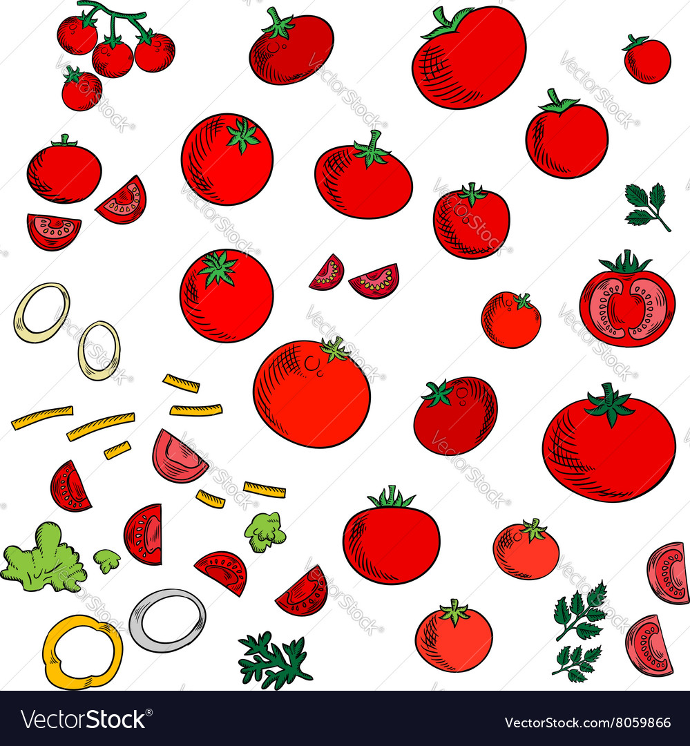 Tomato vegetables icons with spicy herbs vector