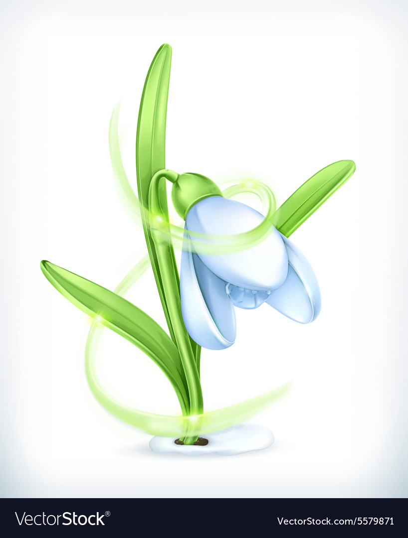 Snowdrop icon vector