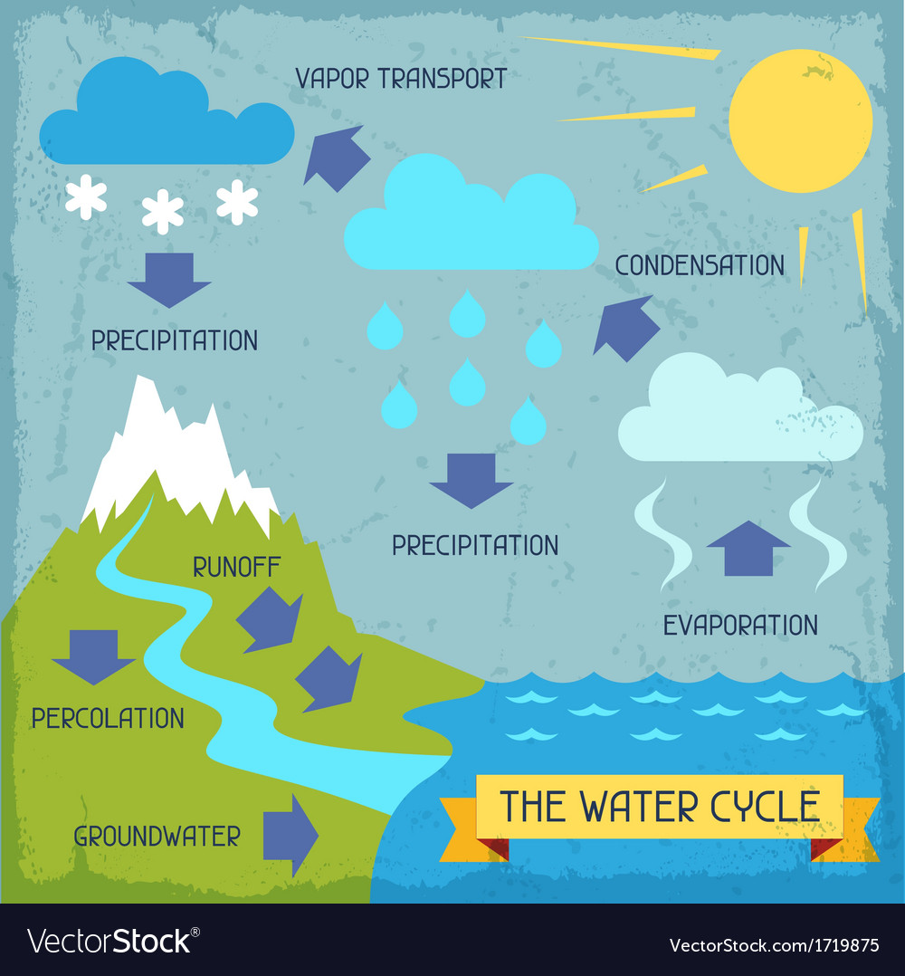 Water cycle poster with nature infographics in vector