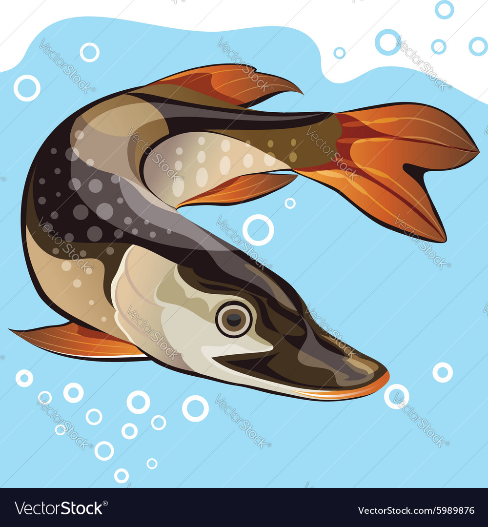 Fish big pike vector