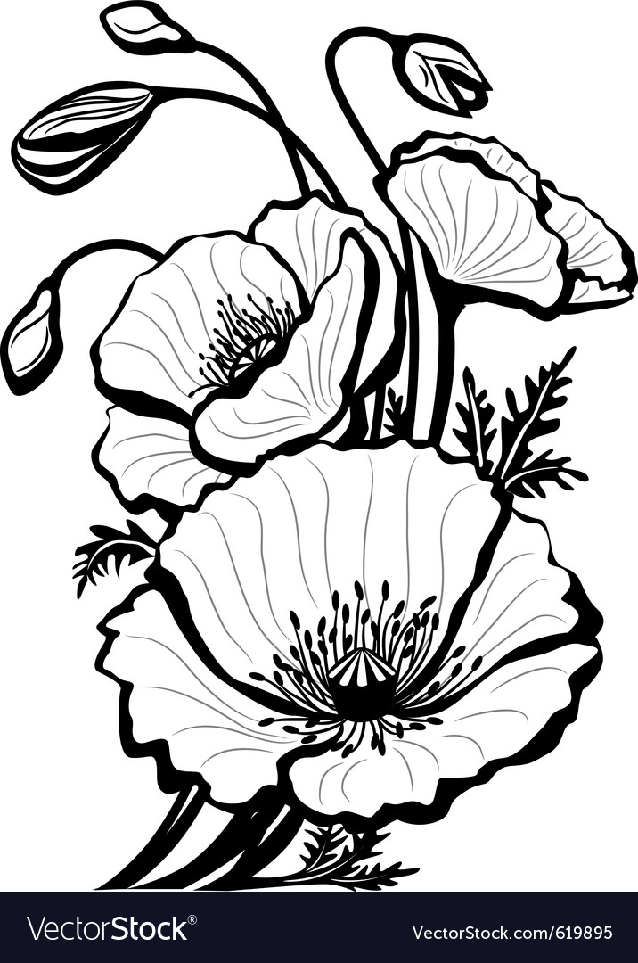 Sketch of poppy flowers vector
