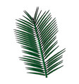 tropical palm leave jungle leaf floral vector image vector image