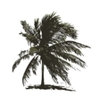 Tropical palm tree for your design vector image vector image