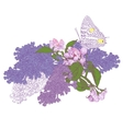 Big Butterfly Sitting Down on Blooming Lilac and vector image