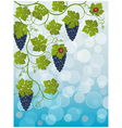 floral background with vine vector image vector image