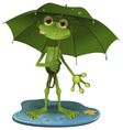 Frog with a green umbrella vector image