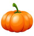 Fresh pumpkin on white background vector image