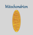 icon in flat style mitochondrion vector image