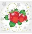 Fresh strawberries vector image vector image