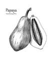 papaya hand drawing vintage style vector image