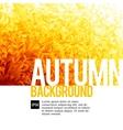 Abstarct autumn backgrounds vector image