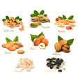 mega collection of colorful nuts vector image