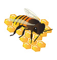 Bee on hive vector image