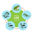 nature infographic of frog life vector image