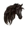 Black horse head watercolor portrait vector image