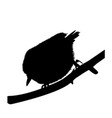silhouette of a bird nuthatch vector image
