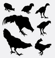 chicken and rooster poultry animal silhouette vector image