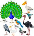 Different types of wild birds vector image