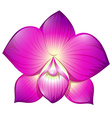 Orchid in purple color vector image