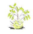 illustration of celery with root leaf vector image