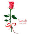 holiday background with pink rose vector image