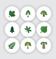 flat icon nature set of maple timber acacia leaf vector image