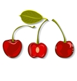 Hand-drawing juicy cherries vector image